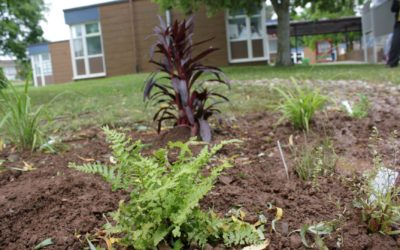 Planting days at our 5W schools